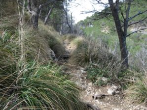 Trail_3